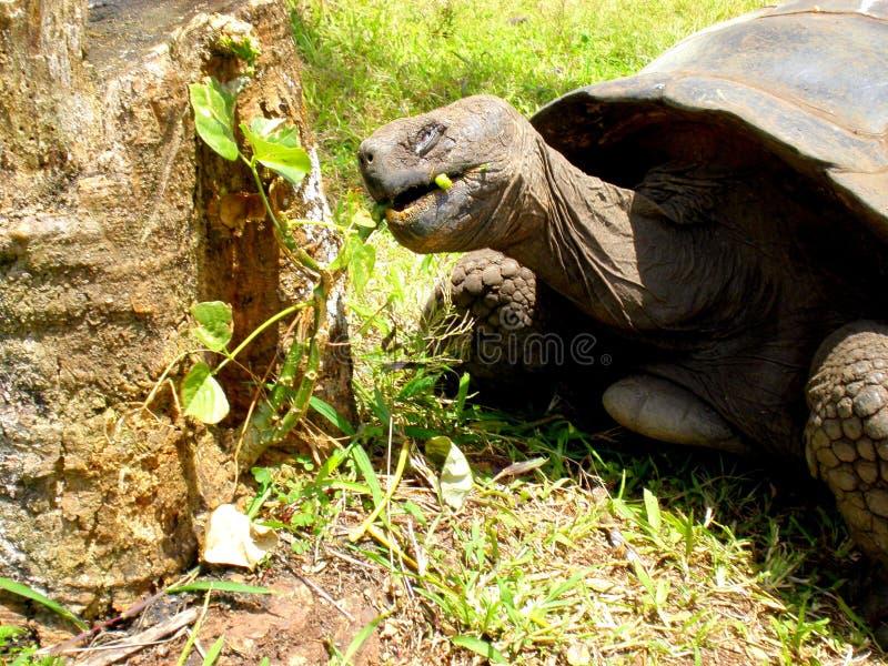 Almoço das tartarugas fotos de stock royalty free