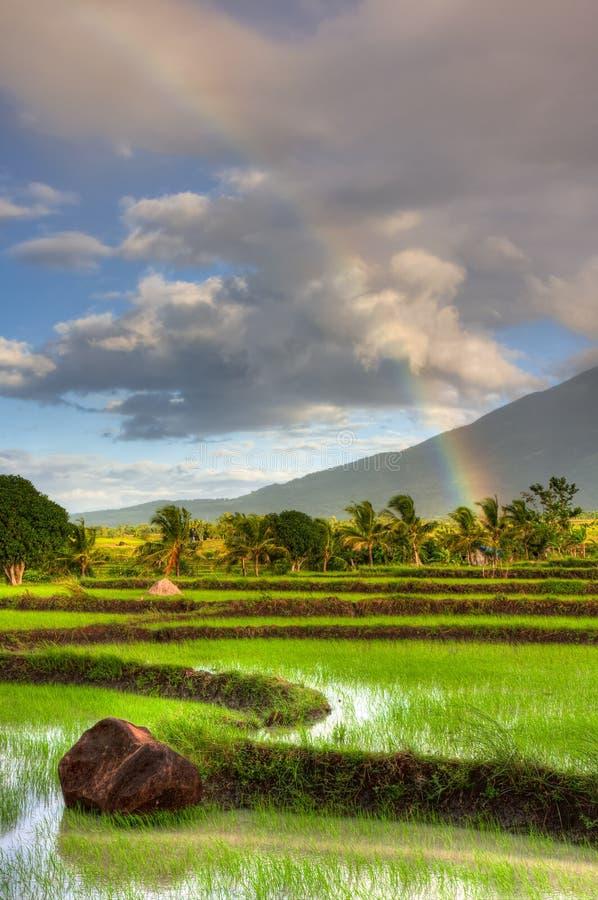 Almofada de arroz fotografia de stock