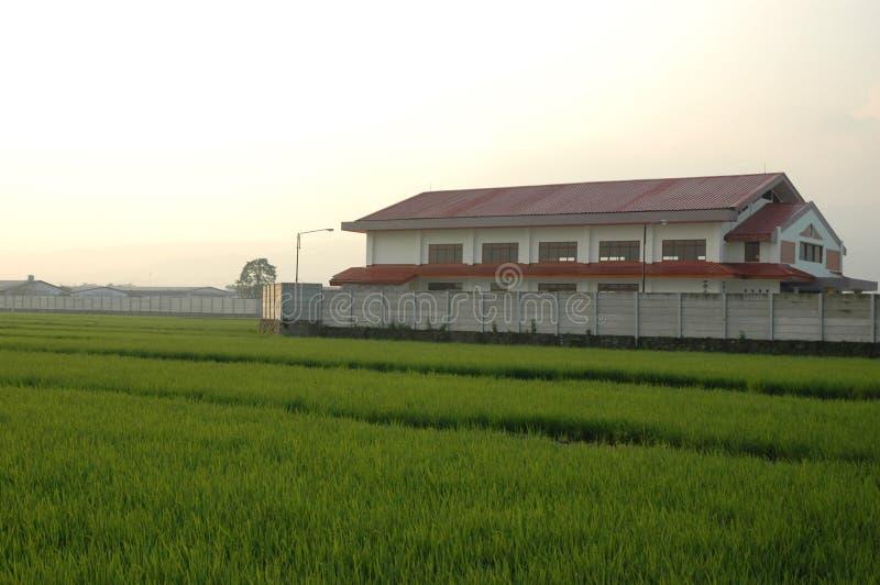Almofadas de arroz imagem de stock royalty free