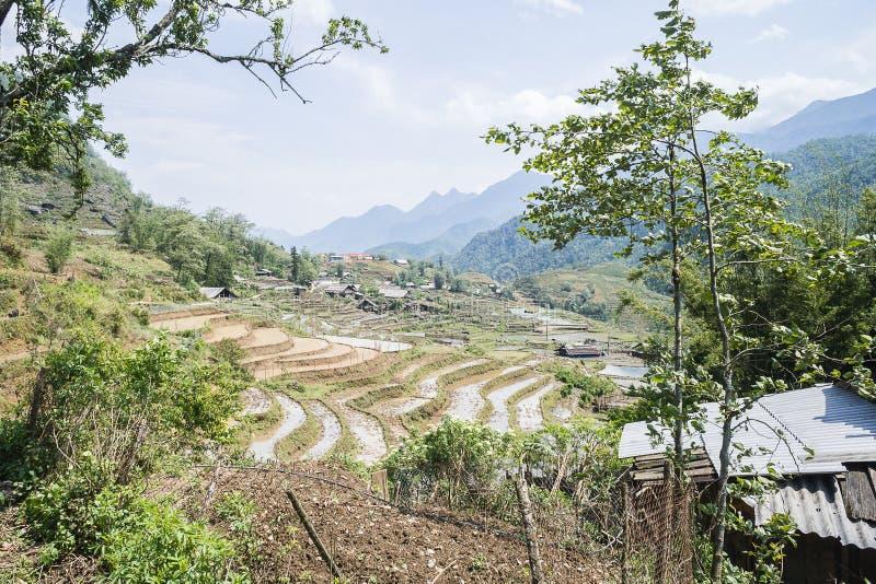 Almofadas de arroz de Sapa, Vietname fotos de stock