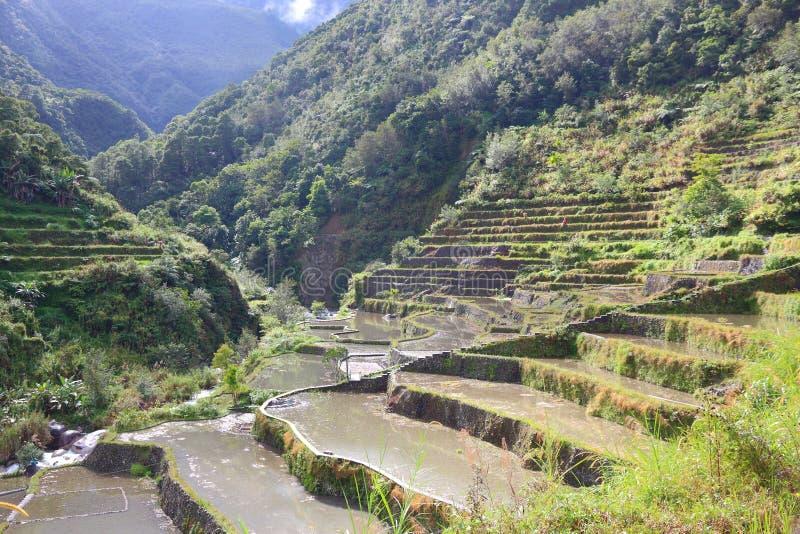Almofadas de arroz de Filipinas imagem de stock royalty free