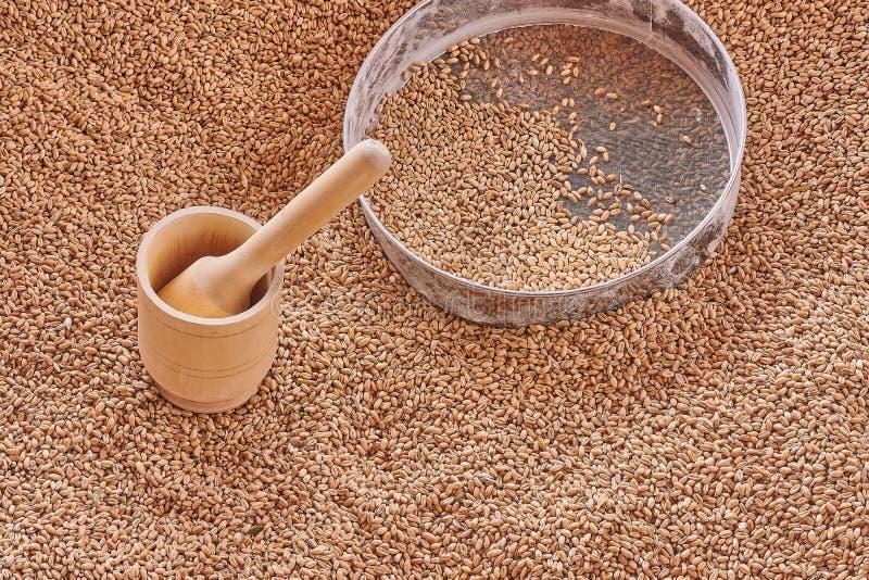 Almofariz de madeira, grões do trigo na peneira metálica Vista superior, textura das grões do trigo imagem de stock royalty free