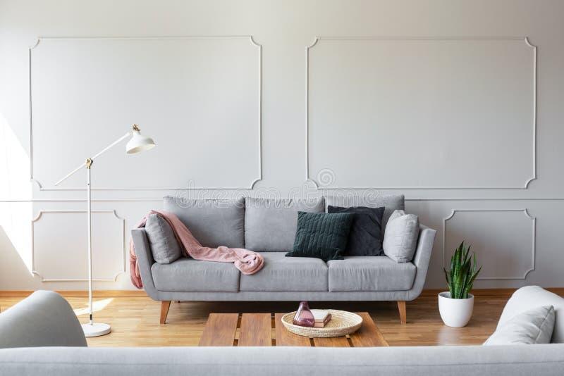Almohadas oscuras y manta rosada en el sofá gris en la sala de estar elegante interior con el espacio y el moldeado de la copia e fotos de archivo libres de regalías