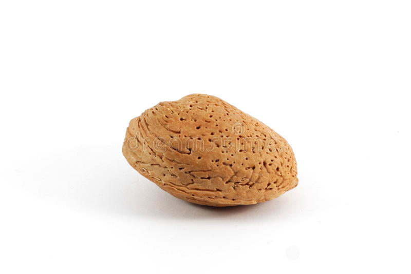 Download Almond stock photo. Image of closeup, haselnuss, detail - 13055550