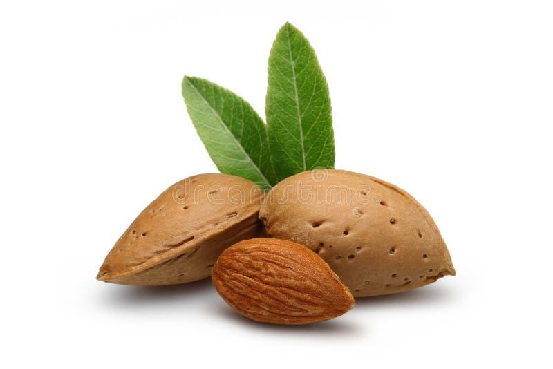 Download Almond stock image. Image of descriptive, background - 22541017
