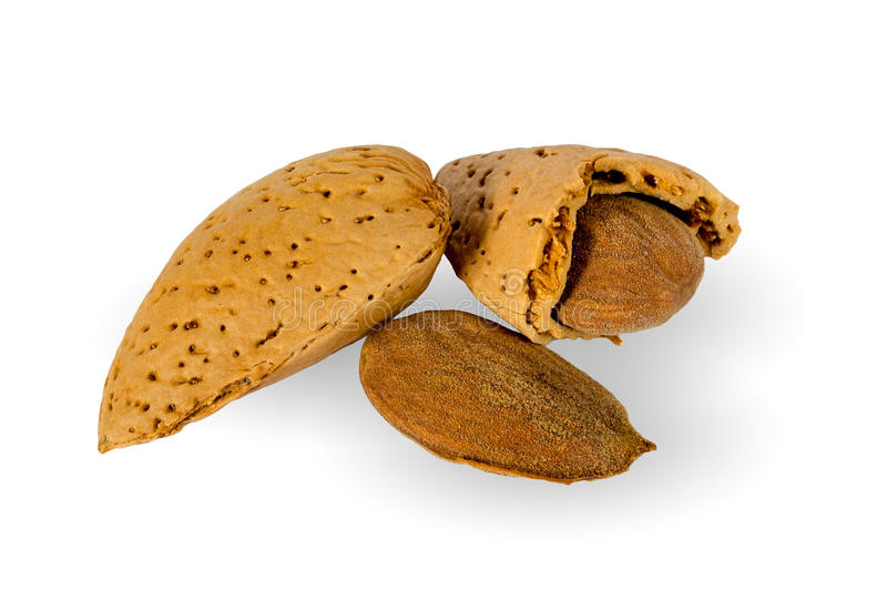 Download Almond Stock Images - Image: 24586674