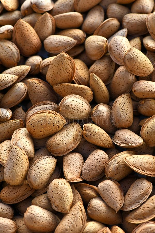 Almond background organic almonds in their shells royalty free stock photo