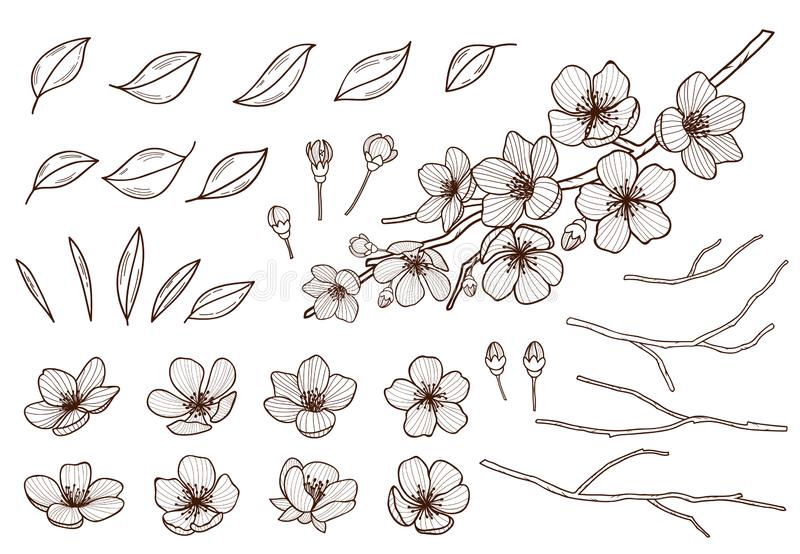 Almond blossoms hand drawn set. Spring flowers leaves ,buds and branches collected. Sakura,cherry, apple tree,plum royalty free illustration