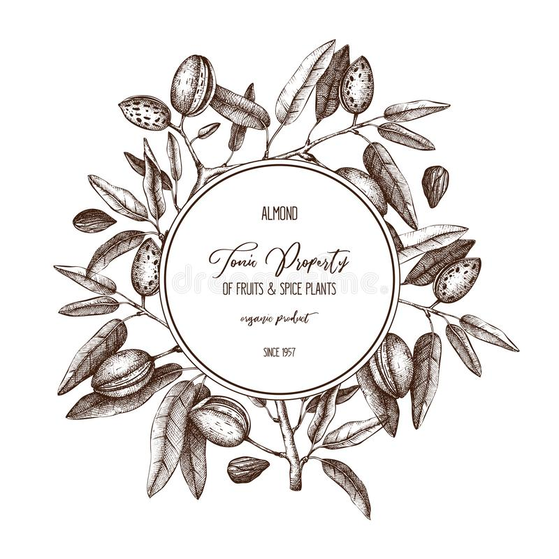 Vector Almond background. Hand drawn nut tree sketch. Botanical round template. Vintage design with tonic plant drawings. stock illustration