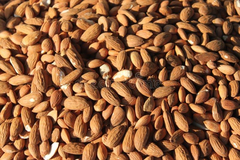 Almond kernels. Pile of almond kernels lighted stock images