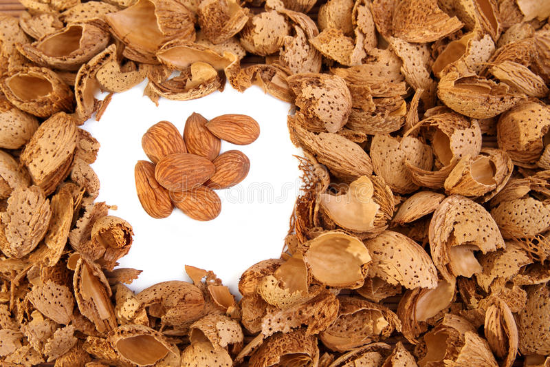 Almond Kernels Among  Hulls Royalty Free Stock Photography
