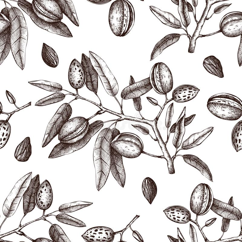 Vector Almond background. Hand drawn nut tree sketch. Botanical seamless pattern. Vintage tonic plant drawing. stock illustration