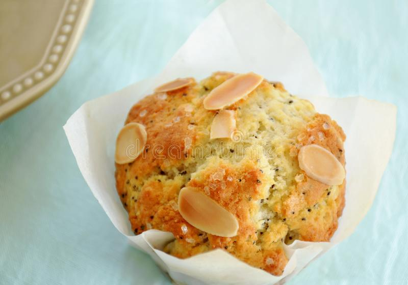 Almond poppy seed muffin closeup royalty free stock photo