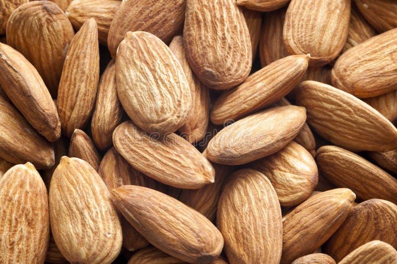 Almond Texture Background stock image