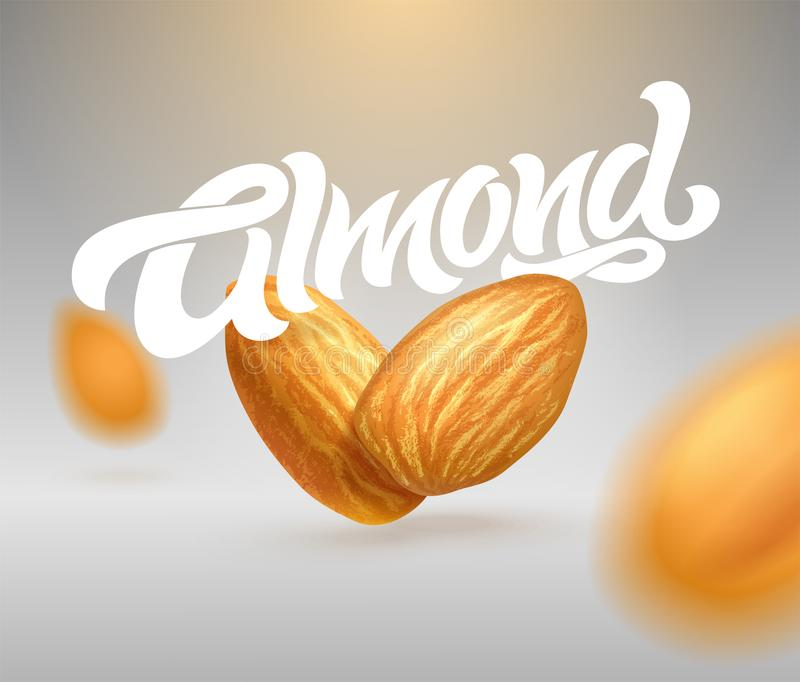 ALMOND typography with realistic illustration of almonds. Modern brush calligraphy. 3d illustration. Template for packaging design vector illustration