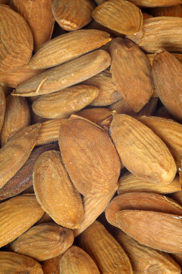 Free Almonds Stock Image - 12914561