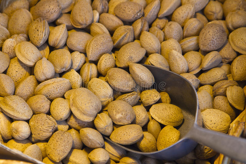Download Almonds stock photo. Image of healthy, still, diet, harvested - 16325566