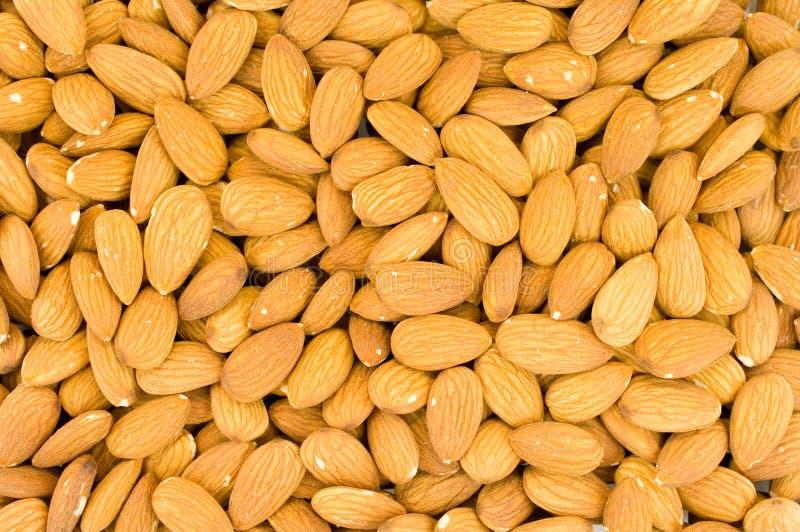 Download Almonds stock image. Image of macro, refreshment, almond - 8350461