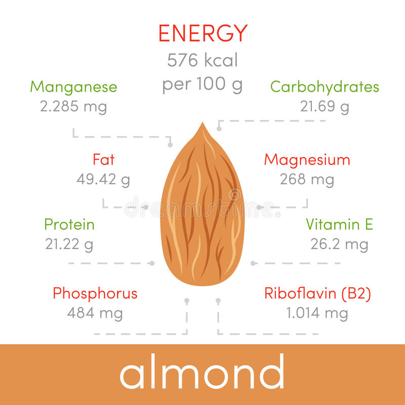 Almonds infographic vector illustration