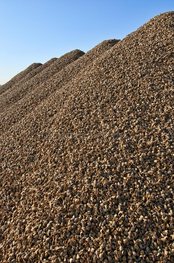 Download Almonds piles stock photo. Image of shells, nuts, agriculture - 27191912