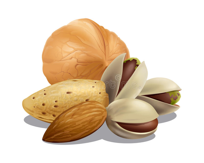 Almonds, Pistachios and Walnut composition. Detailed vector illustration for your projects royalty free illustration