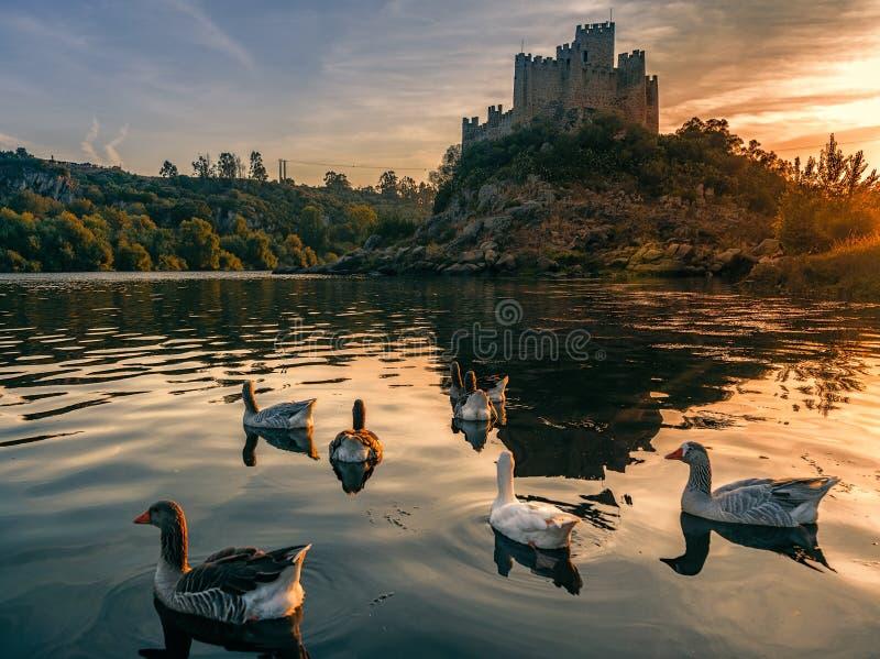 Almourol slott på solnedgången med lös gäss fotografering för bildbyråer