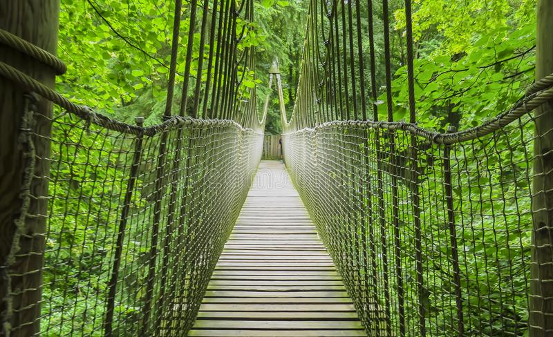 Alnwick houten Treehouse, houten en kabelbrug, Alnwick Tuin, in de Engelse provincie van Northumberland stock foto