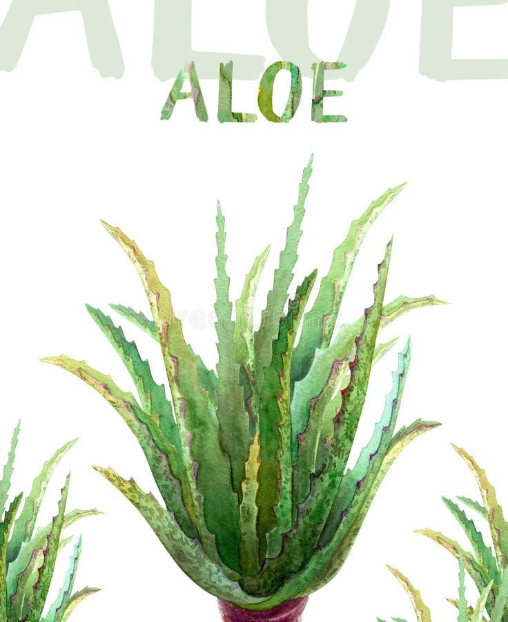 Aloès Vera d'illustration d'aquarelle illustration libre de droits