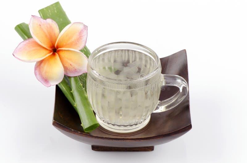 Aloés (aloés vera (L.) Burm.f.) As ervas de Tailândia têm propriedades medicinais. imagem de stock royalty free