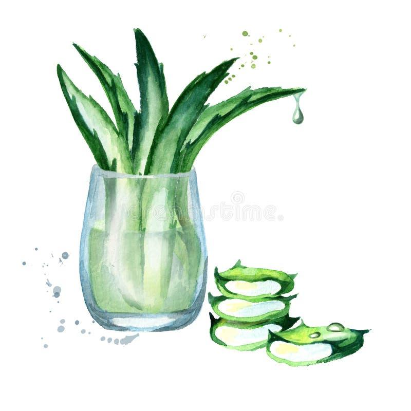 Aloés orgânico vera e composição do iogurte Ilustração da aguarela ilustração stock