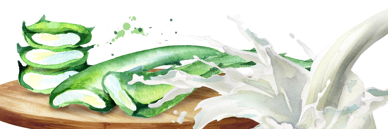 Aloés orgânico vera e respingo do iogurte Ilustração tirada mão da aquarela ilustração do vetor