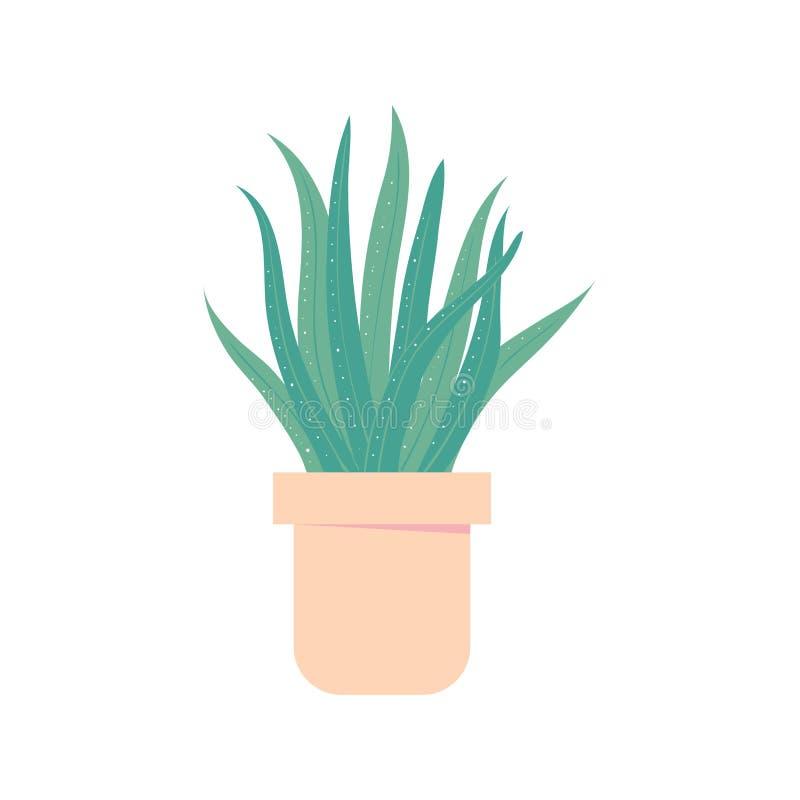 Aloés vera no potenciômetro Houseplant para o interior Planta home isolada ilustração royalty free