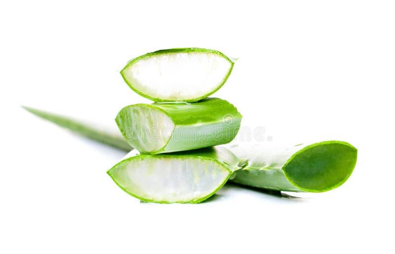 Aloés verde no fundo branco Folha de vera do aloés fotos de stock