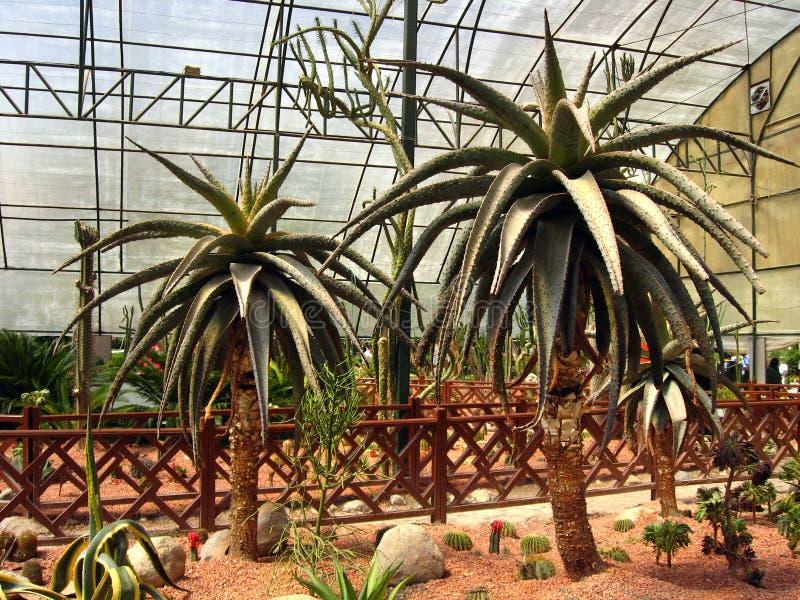 Aloëmarlothii bij cactustentoonstelling in Isphahan, Iran stock foto's