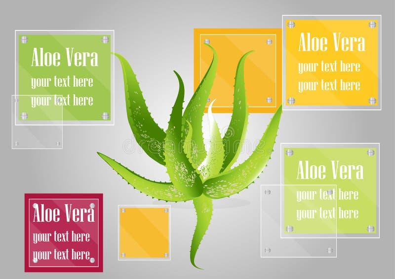 Aloe Βέρα με το υπόβαθρο πλαισίων γυαλιού, διανυσματική απεικόνιση απεικόνιση αποθεμάτων