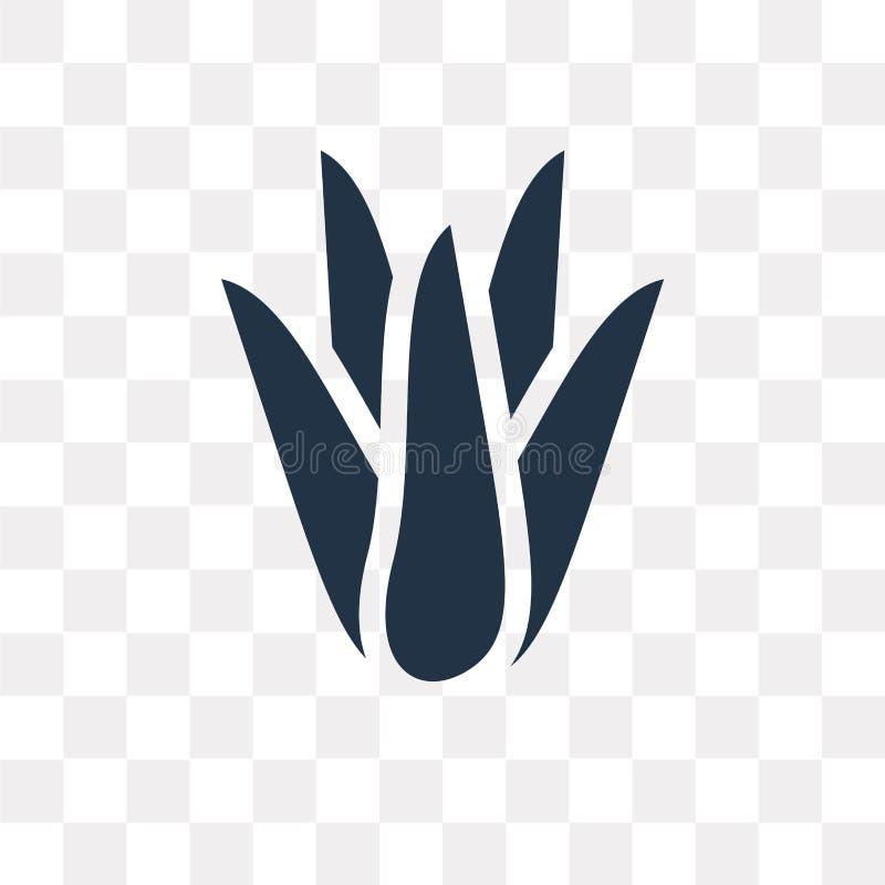 Aloe διανυσματικό εικονίδιο της Βέρα που απομονώνεται στο διαφανές υπόβαθρο, Aloe Β απεικόνιση αποθεμάτων