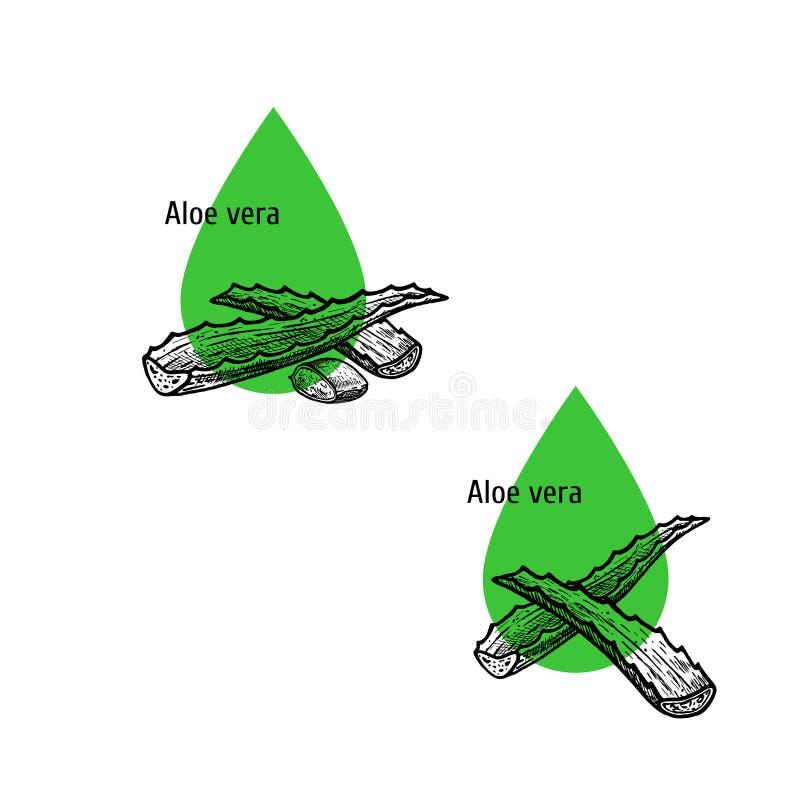 Aloe σύνολο εικονιδίων πετρελαίου της Βέρα Συρμένο χέρι σκίτσο Εκχύλισμα των εγκαταστάσεων r απεικόνιση αποθεμάτων