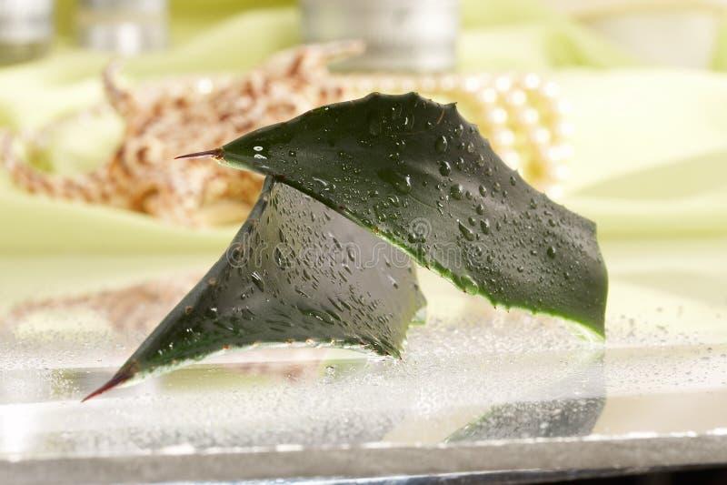 aloe χλωρίδα λουλουδιών βοτανική στοκ εικόνες