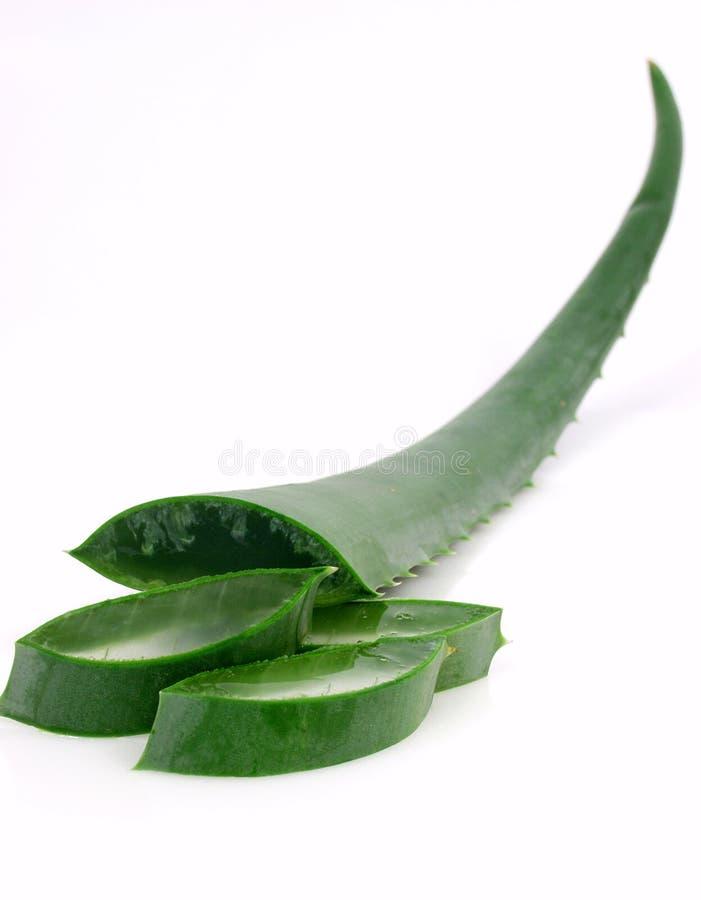 Aloe stock photography