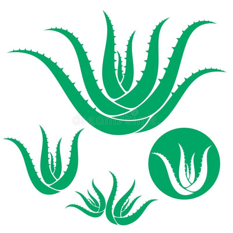 Aloe vektor illustrationer