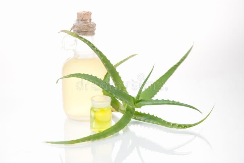 Download Aloe Della Pianta Da Appartamento Fotografia Stock - Immagine di bellezza, background: 30831690