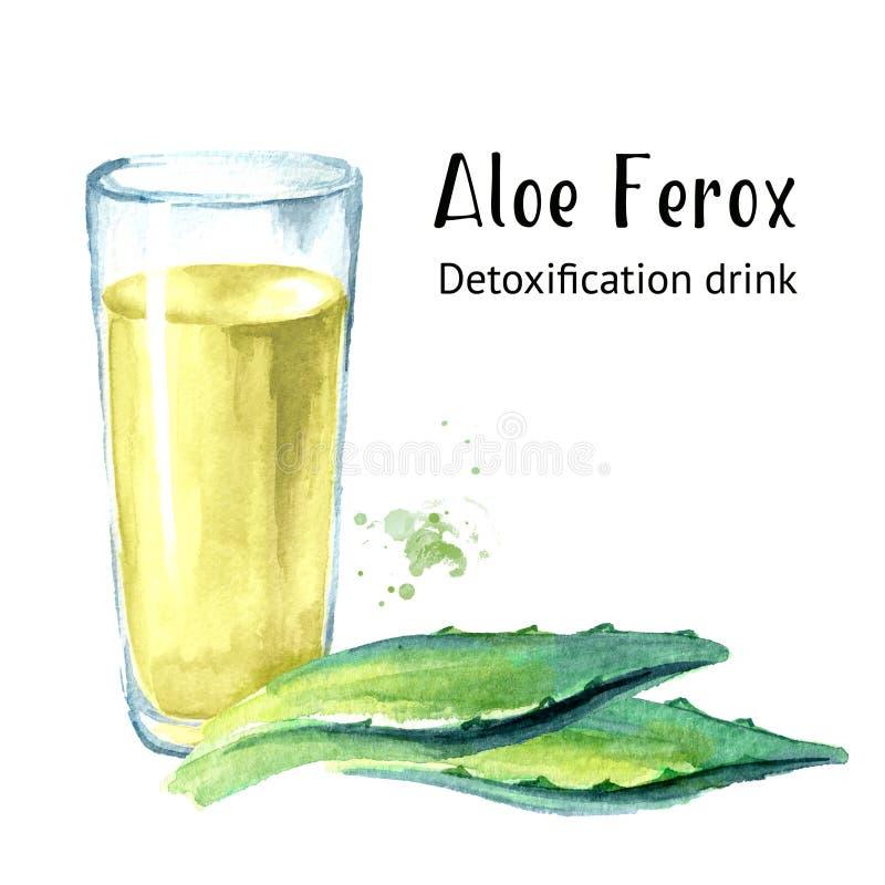 Aloe Ferox-Entgiftungsgetränk Gezeichnete Illustration des Aquarells Hand lokalisiert auf weißem Hintergrund stock abbildung