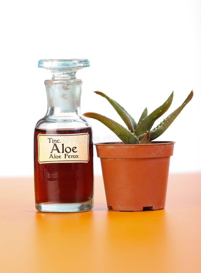 Aloe Ferrox Anlage und Auszug in der Flasche lizenzfreie stockfotografie