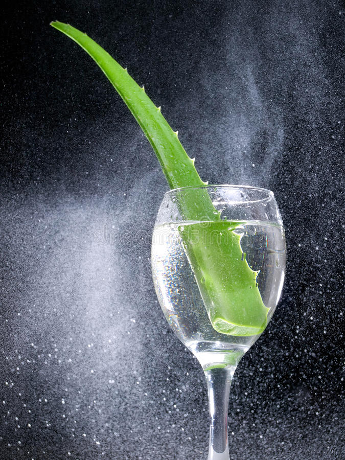 Aloe fresh. Leaf of Aloe Vera cactus in a glass surrounded by a multitude of droplets stock photo