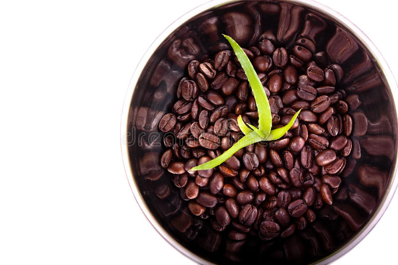 Download Aloe Grows In Coffee Beans Royalty Free Stock Photography - Image: 27062627