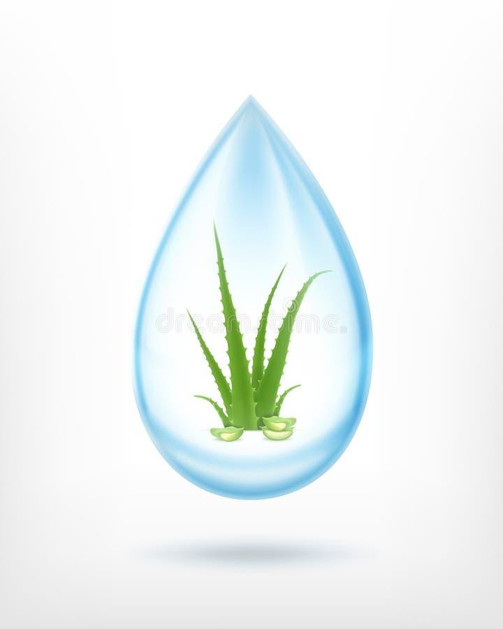 Aloe innerhalb des waterdrop lizenzfreie abbildung