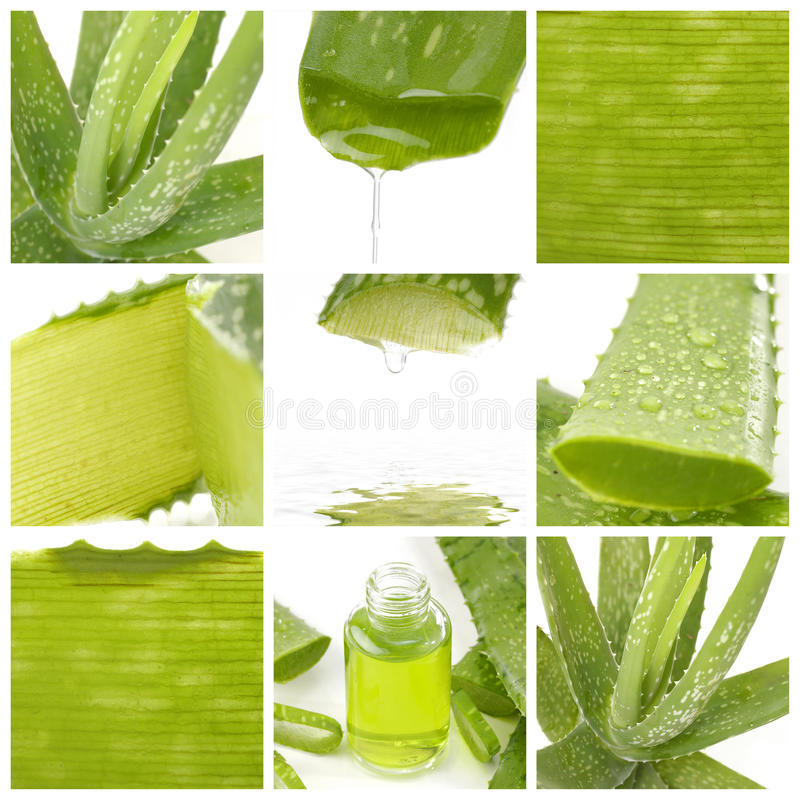 Aloe leaf royalty free stock images
