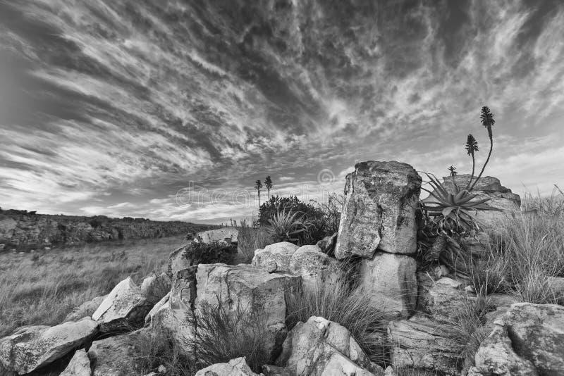 Aloe på berget vaggar landskapsolnedgång med molniga himlar royaltyfria bilder