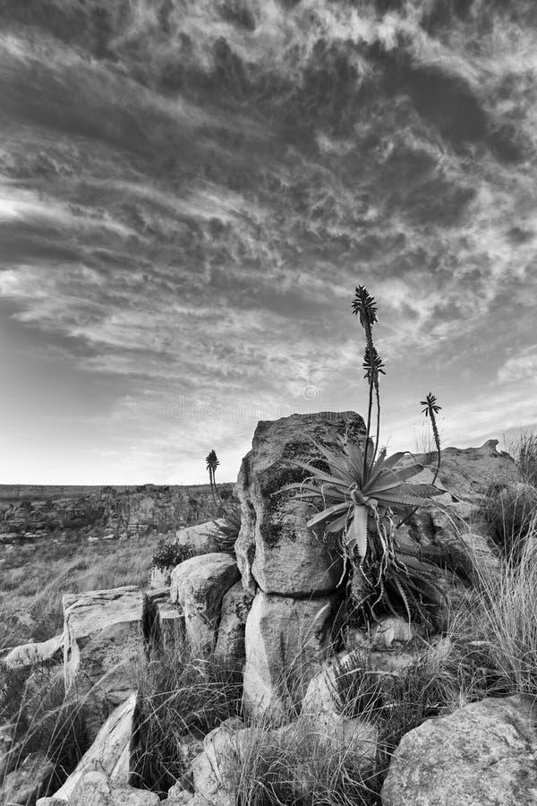 Aloe på berget vaggar landskapsolnedgång med molniga himlar royaltyfri bild