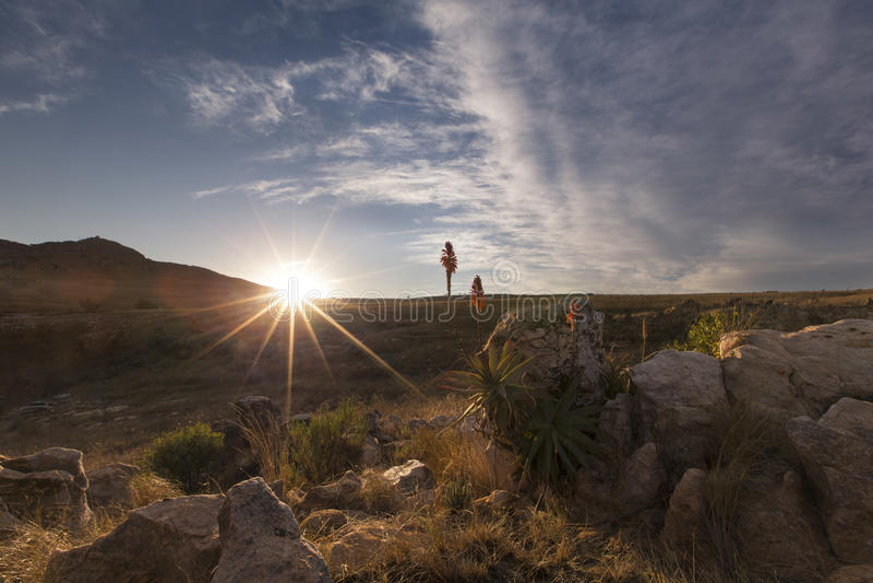 Aloe på berget vaggar landskapsolnedgång med molniga himlar arkivbilder